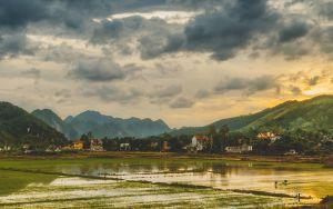 rice-paddy-LQ.jpg