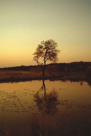 south-africa-tree-LQ.jpg