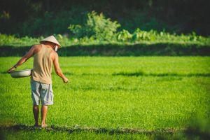 rice-farmer-LQ.jpg